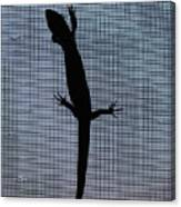 American Five-lined Skink Canvas Print