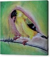 American Gold Finch  Canvas Print