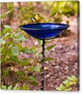 American Goldfinch At Water Bowl Canvas Print
