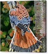 American Kestrel In My Garden Canvas Print