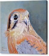 American Kestrel No. 2 Canvas Print