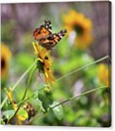 American Lady Butterfly By The Beach Canvas Print