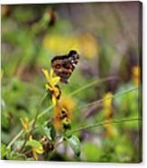 American Lady Butterfly Seaside Canvas Print