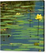 American Lotus Canvas Print