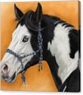 American Paint Horse - Soft Pastel Canvas Print