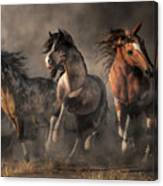 American Paint Horses Canvas Print