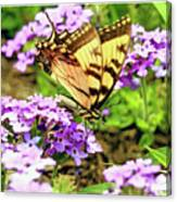 Yellow Eastern Tiger Swallowtail Series Canvas Print