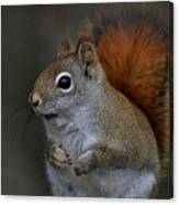 American Red Squirrel Portrait Canvas Print