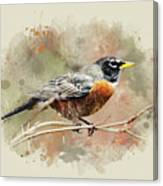 American Robin - Watercolor Art Canvas Print
