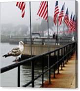 American Seagull Canvas Print