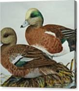 American Widgeons Canvas Print
