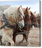 American Work Horse Canvas Print
