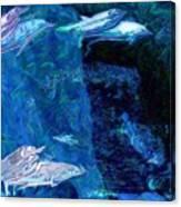 Amidst Dolphins Canvas Print
