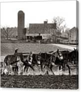 Amish Agriculture  Canvas Print