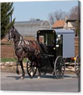 Amish Buggy And High Stepper Canvas Print