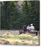 Amish Farmer Raking Hay At Dusk Canvas Print