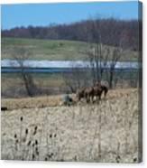 Amish Farming Canvas Print