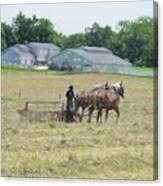 Amish Girl Raking Hay As Painting Canvas Print