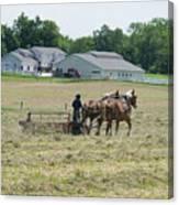 Amish Girl Raking Hay Photo Canvas Print