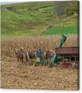 Amish Harvest In Ohio  Canvas Print