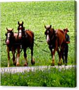 Amish Horse Team Canvas Print