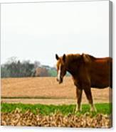 Amish Work Horse Canvas Print