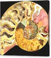 Ammonite Fossil Canvas Print