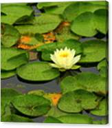 Among The Lily Pads Canvas Print