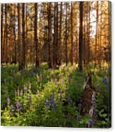 Among The Lupines Canvas Print