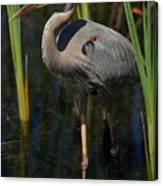 Among The Reeds Canvas Print