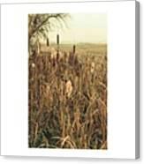 *among The Reeds  #landscape Canvas Print