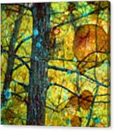 Amongst The Branches Canvas Print