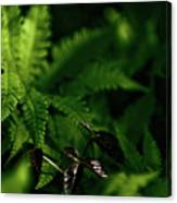 Amongst The Fern Canvas Print