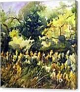 Amongst The Goldenrods Canvas Print