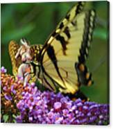 Amorous Butterfly And Faerie Canvas Print