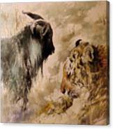 Amur And Timur Canvas Print