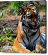 Amur Tiger 3 Canvas Print