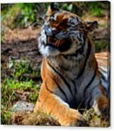Amur Tiger 6 Canvas Print