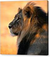 An Adult Male African Lion, Panthera Canvas Print