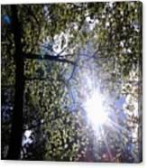 An Alabama Sun Canvas Print