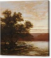 An Australian Mangrove. Ebb Tide Canvas Print