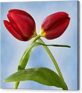 An Embrace Of Tulips Canvas Print