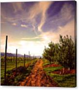 An Evening By The Orchard Canvas Print