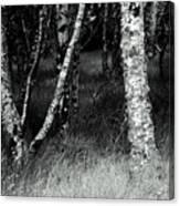 An Irish Copse Canvas Print