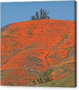 An Ocean Of Orange On The Mountain Top Canvas Print