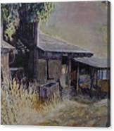 An Old Friend Canvas Print