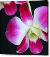 An Orchid Canvas Print