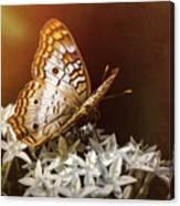Anartia Jatrophae - White Peacock Butterfly  Canvas Print