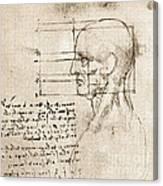 Anatomical Drawing By Leonardo Da Vinci Canvas Print
