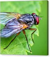 Anatomy Of A Pest Canvas Print